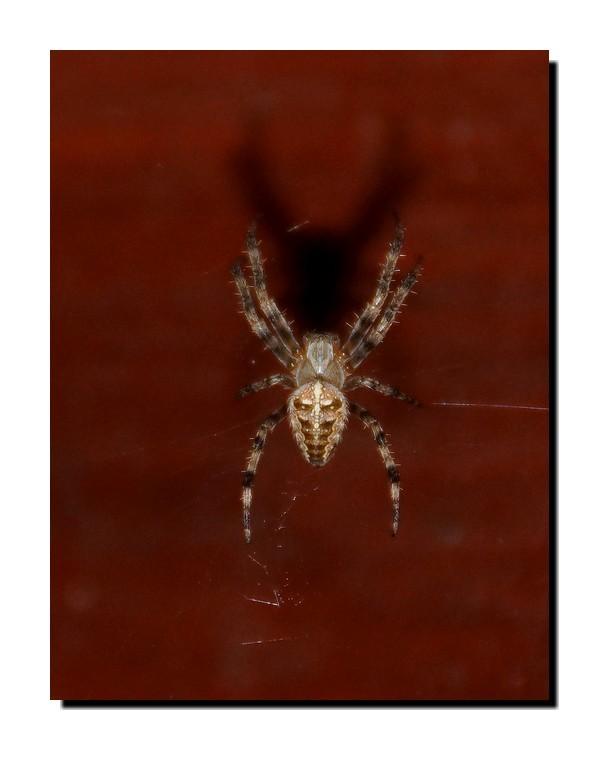 L'ombre de l'araignée...