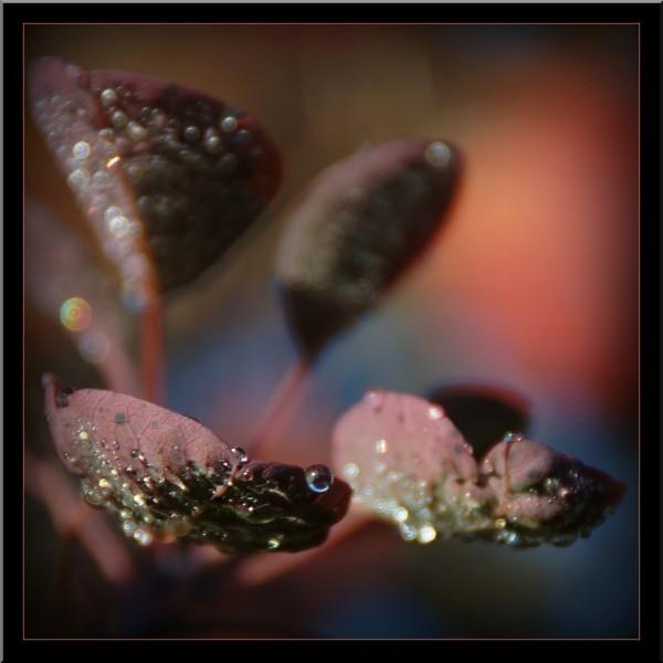 Perles de pluie....