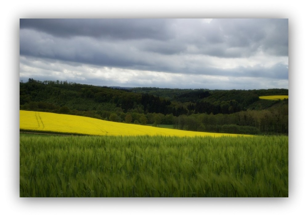 Les vallons jaunes...