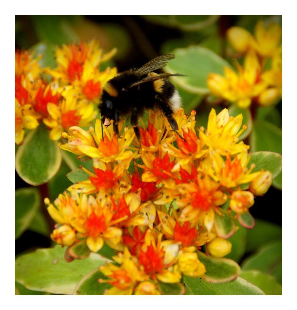 La couleur du miel...