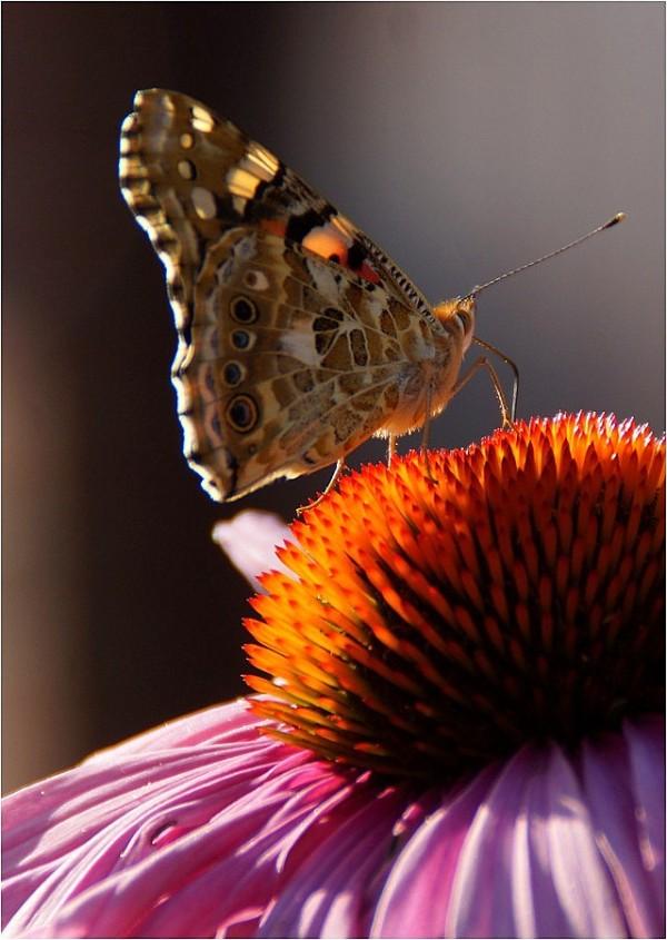 L'effet papillon...(2)