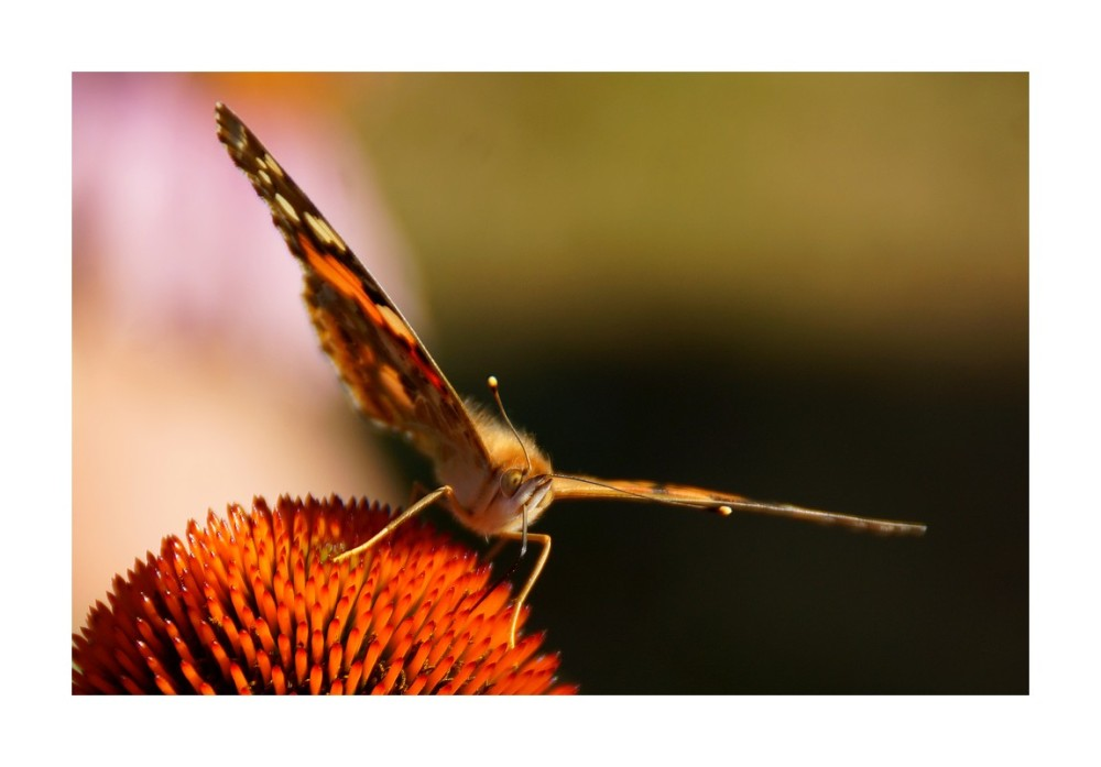 L'effet papillon...(3)