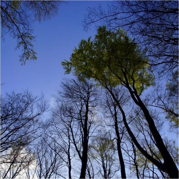 Le frémissement des grands arbres...