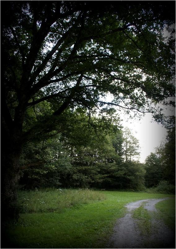 Sous le chêne séculaire...