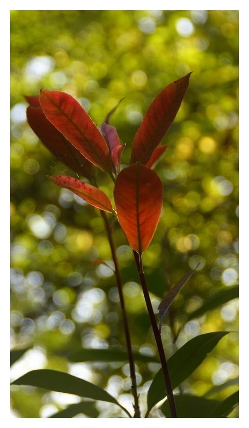 Le vent dans les feuilles...
