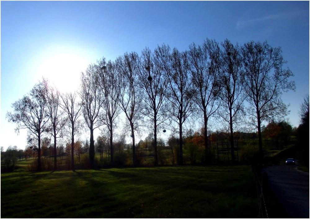 A l'ombre des grands arbres...