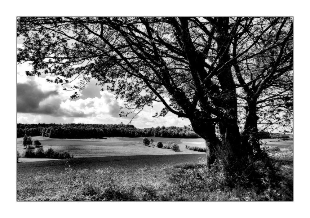 Paysage de la Meuse....(3)