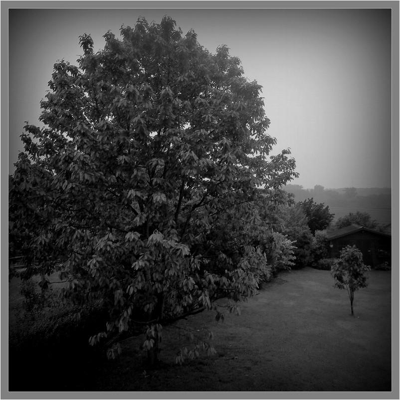 Auprès de mon arbre...6 ans on passé.