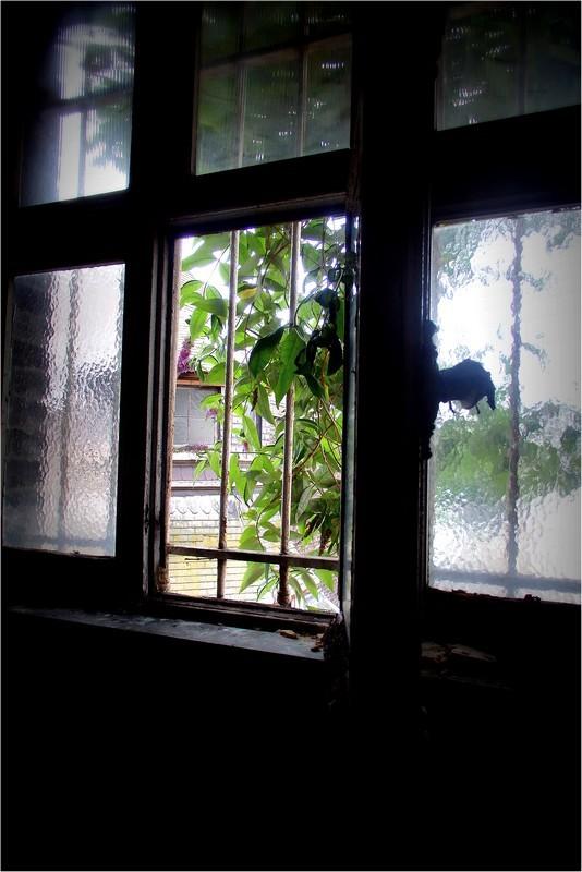 Par la fenêtre ouverte...