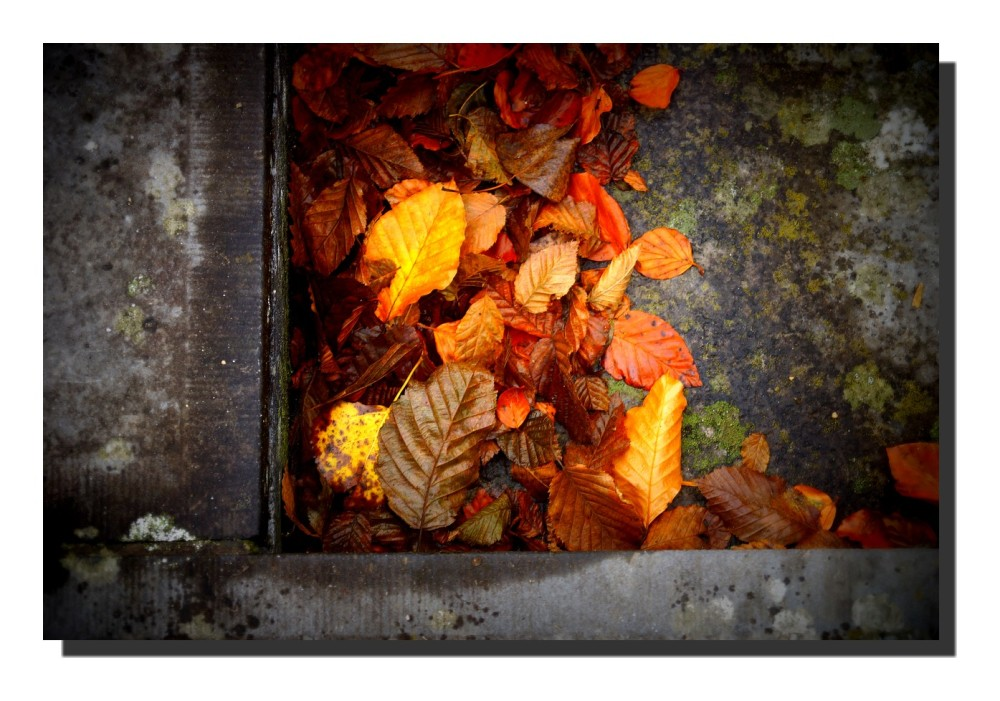 Quand les feuilles mortes se ramassent à la pelle.