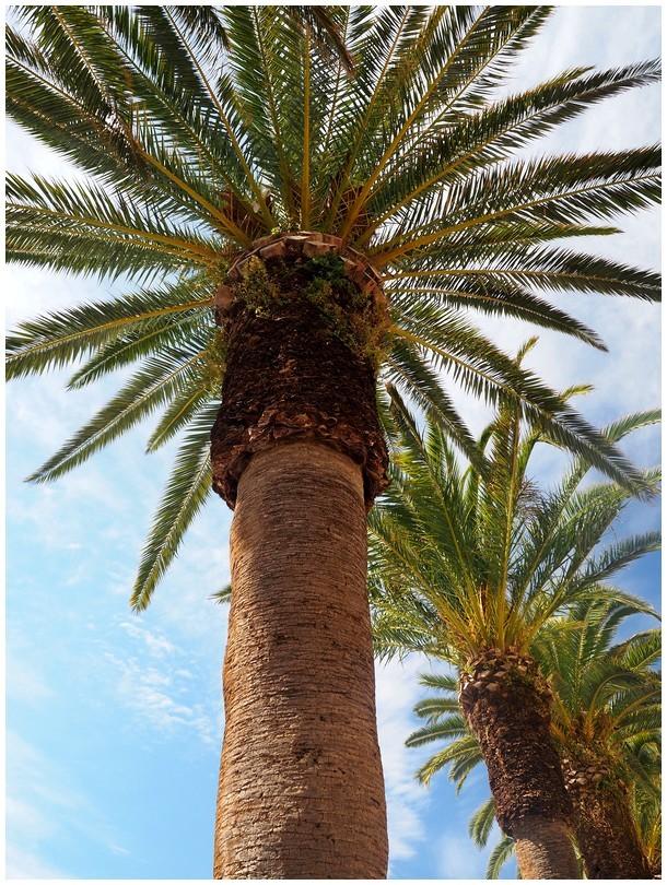 MENORCA...sous les palmiers.