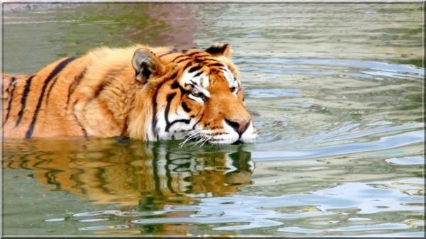 L'heure du bain...