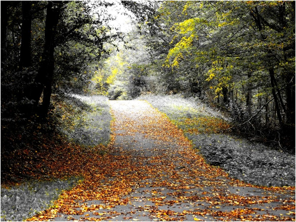Les couleurs de l'automne...