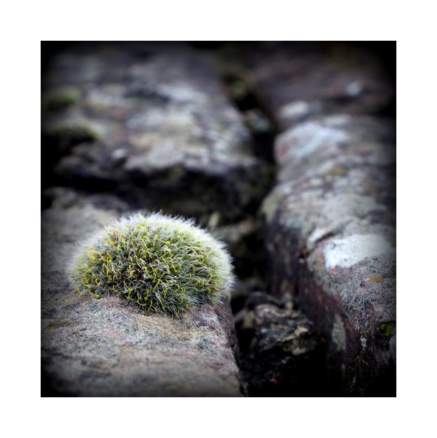 à fleur de pierre...