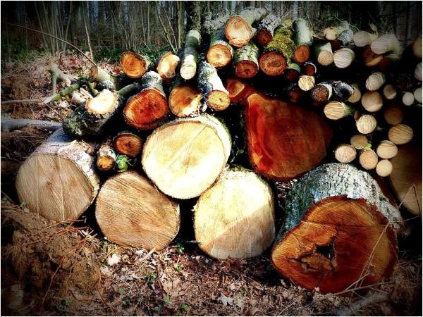 les coupes de bois