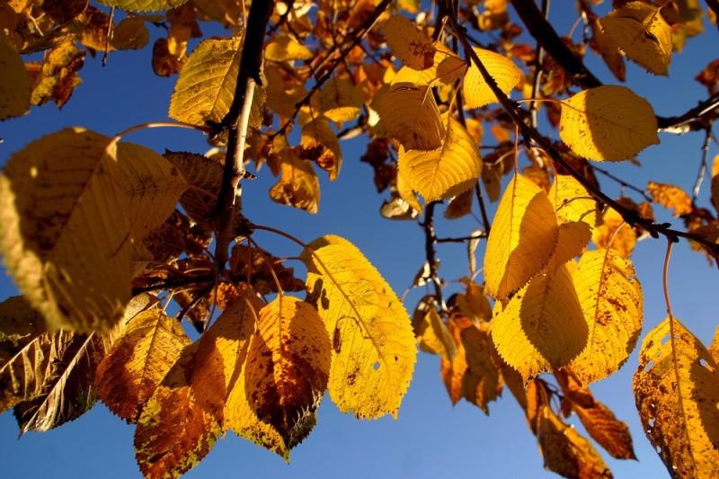 De la lumière dans mon arbre...