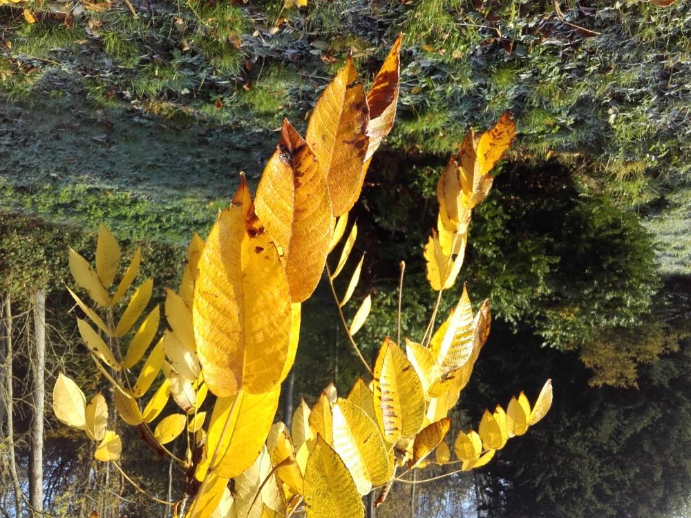 D'or et d'automne