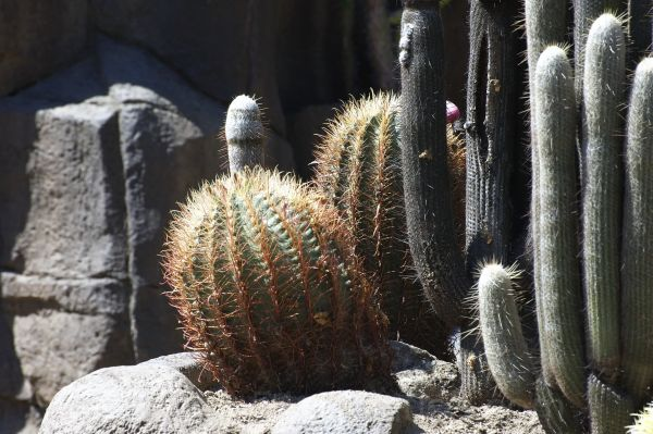 cactus and rock