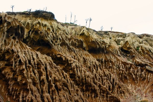 eroded cliffs and Yucca, San Diego