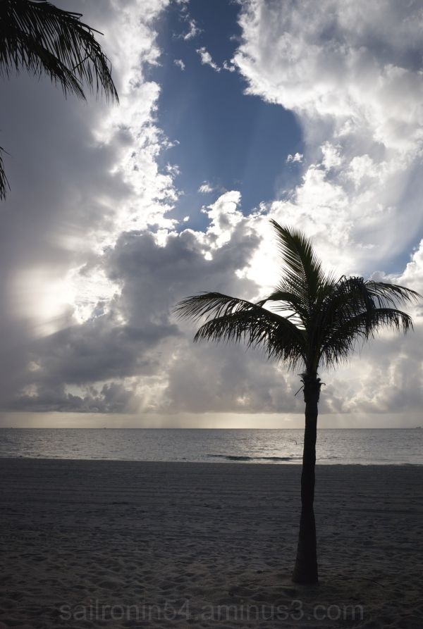 Palm, clouds, sky and ocean, beach, sand, water