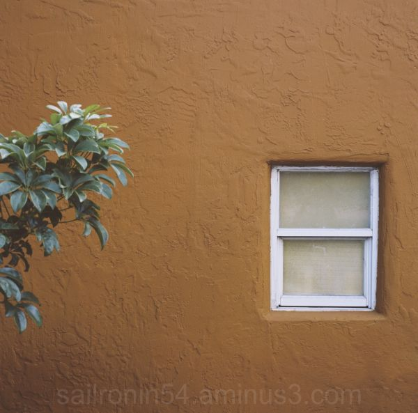 orange wall with window and plant