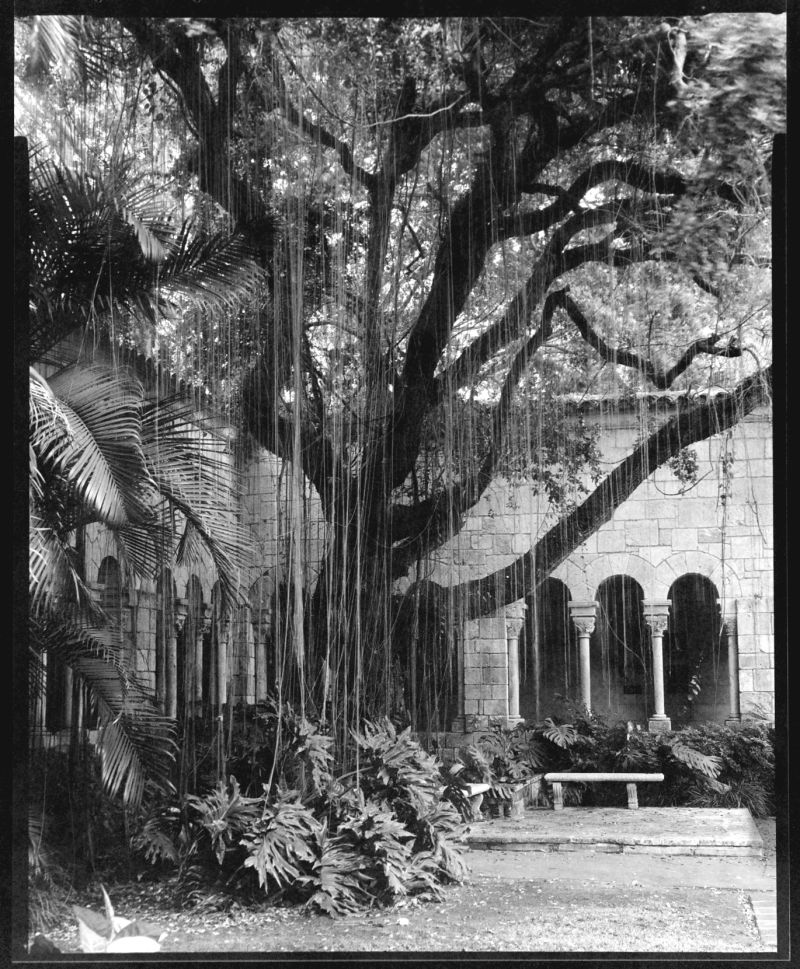 Old Spanish Mission, Miami, FL, tree in courtyard