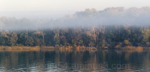 savannah river foliage and fog