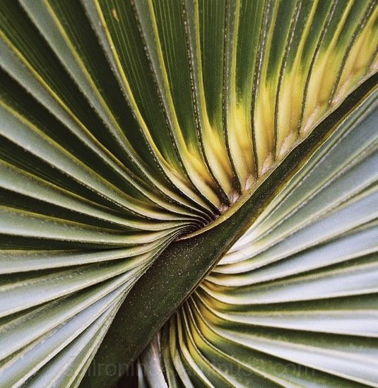 color macro of palm frond