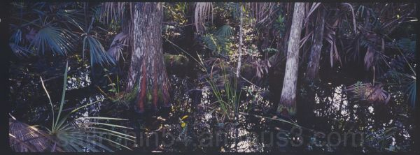 Cypress swamp water and palm fronds