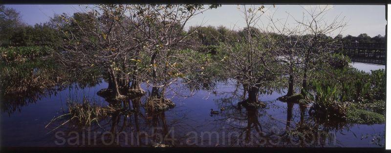 blue water and trees Wakodahatchee Wetlands