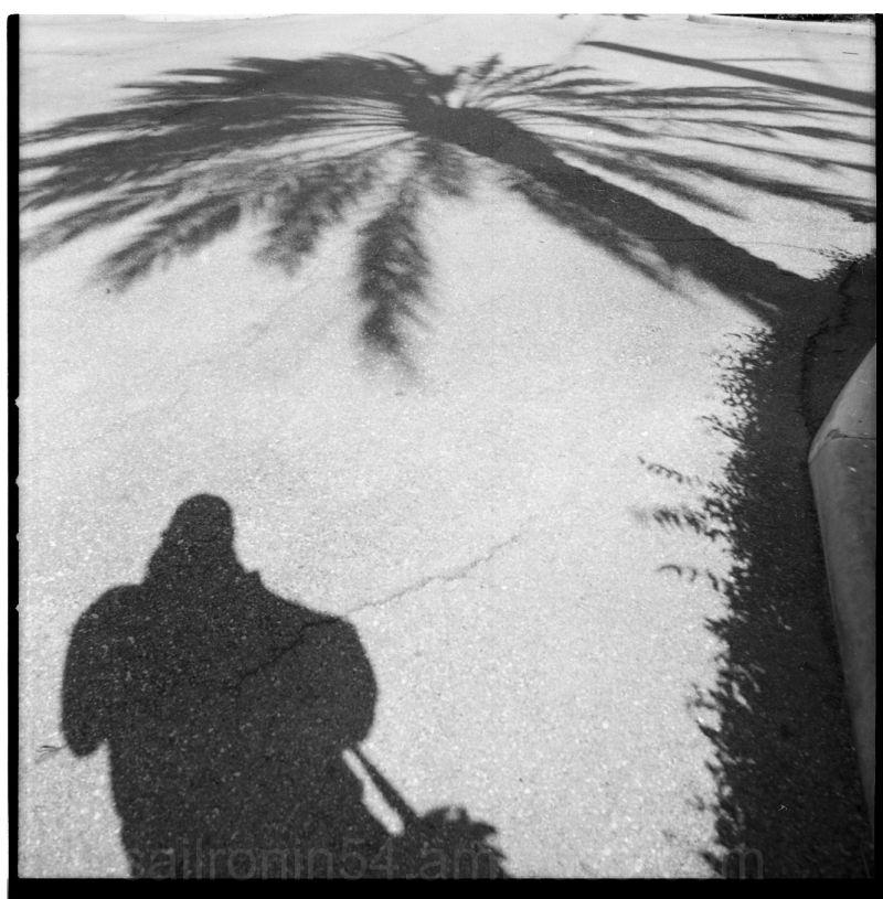 self portrait with palm tree