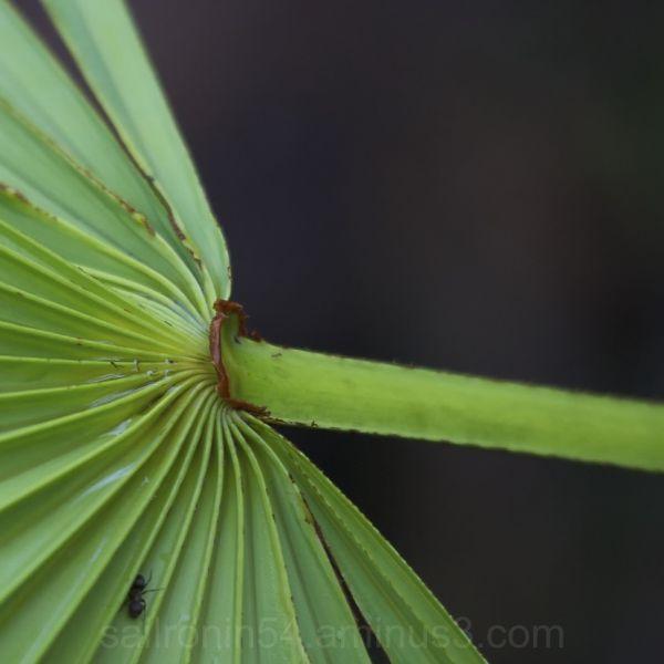 Green palm frond against dark background