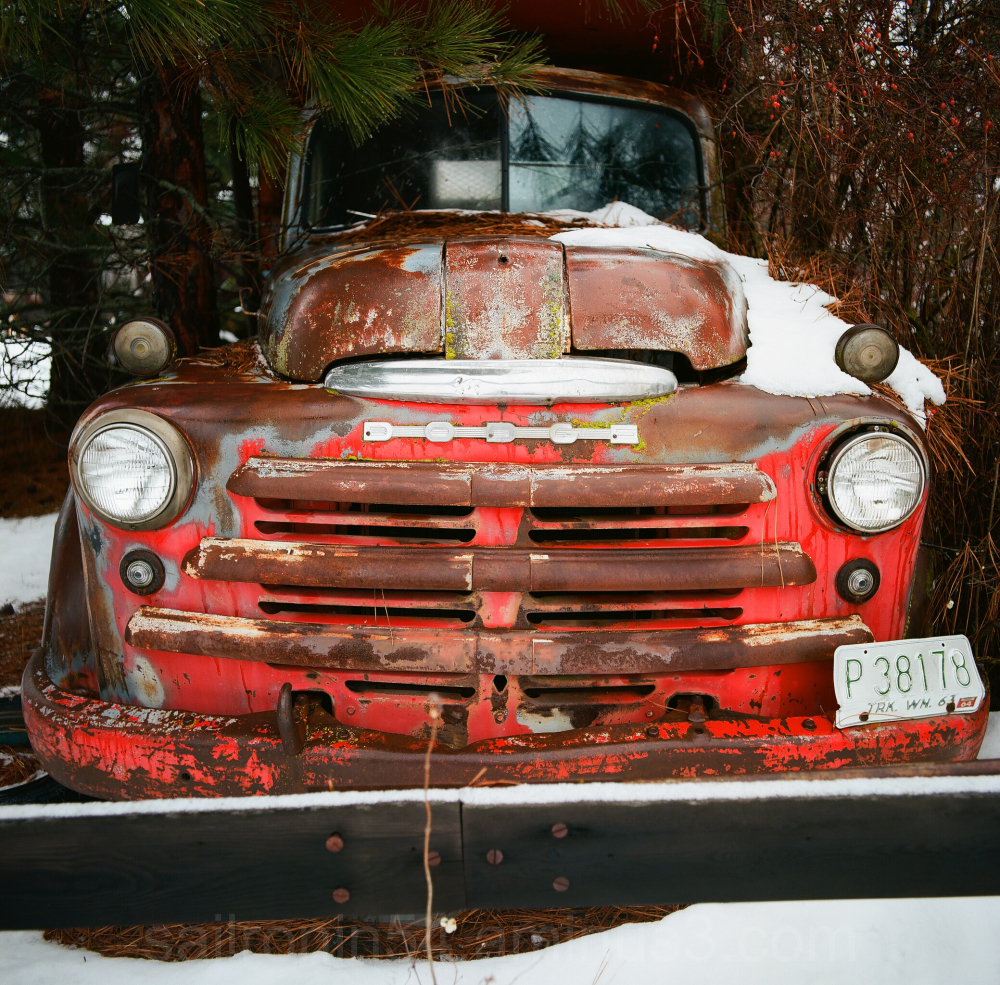 An abandoned Dodge truck sits under trees