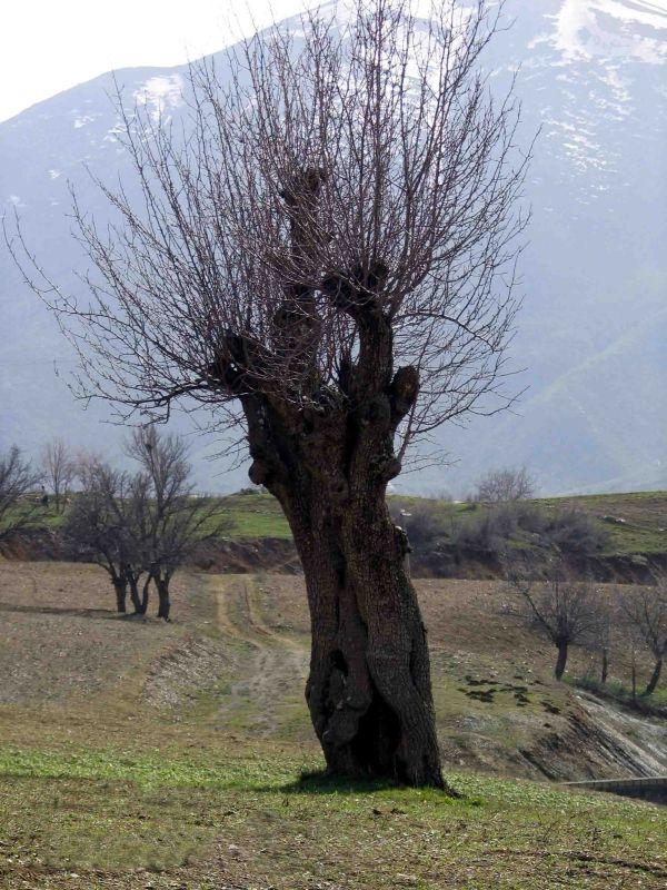 تک درخت تنهایم.......
