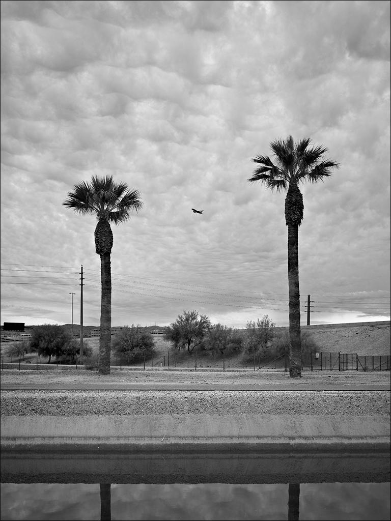 Palm trees and Plane