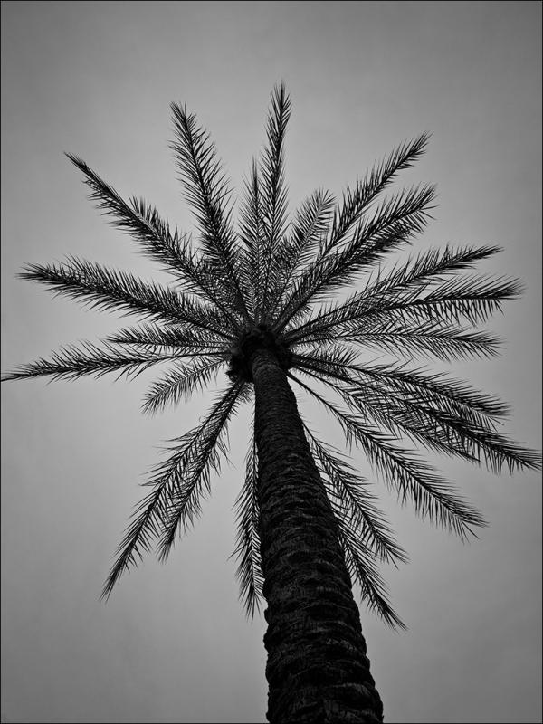 One Palm, No. 1