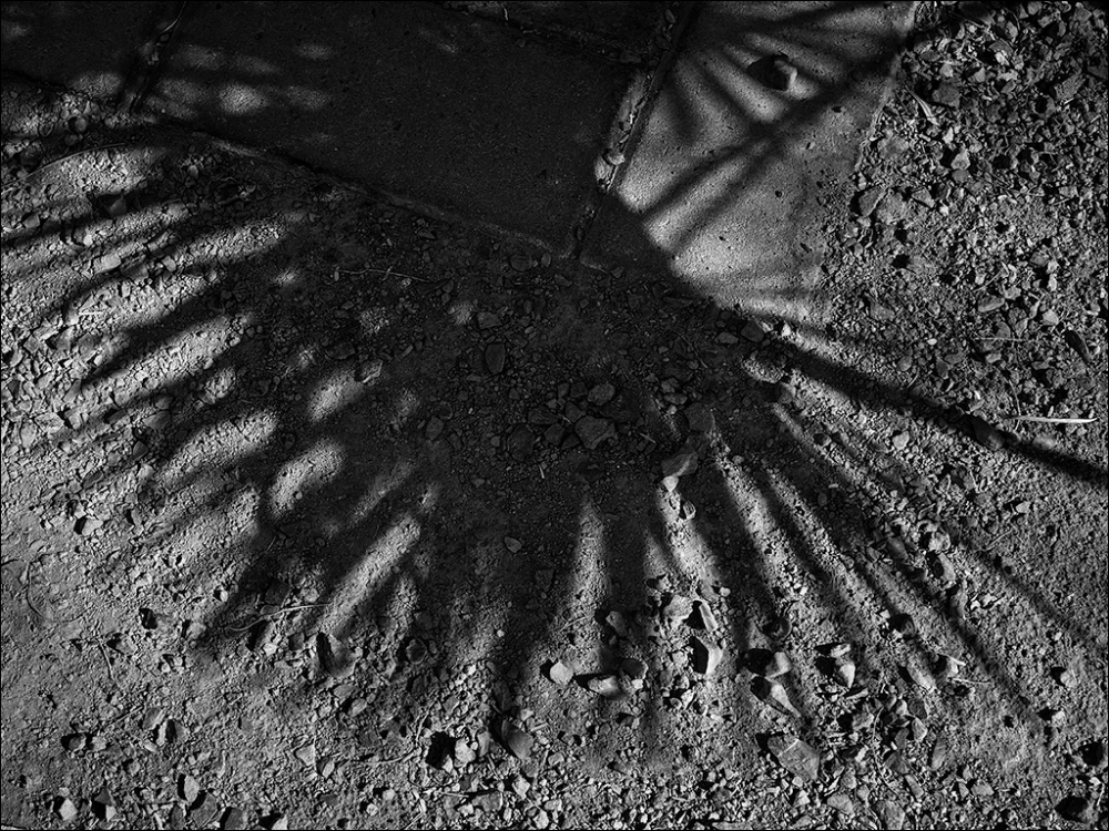Palm frond shadows