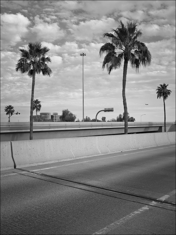 Palm Trees, Poles, and a Plane