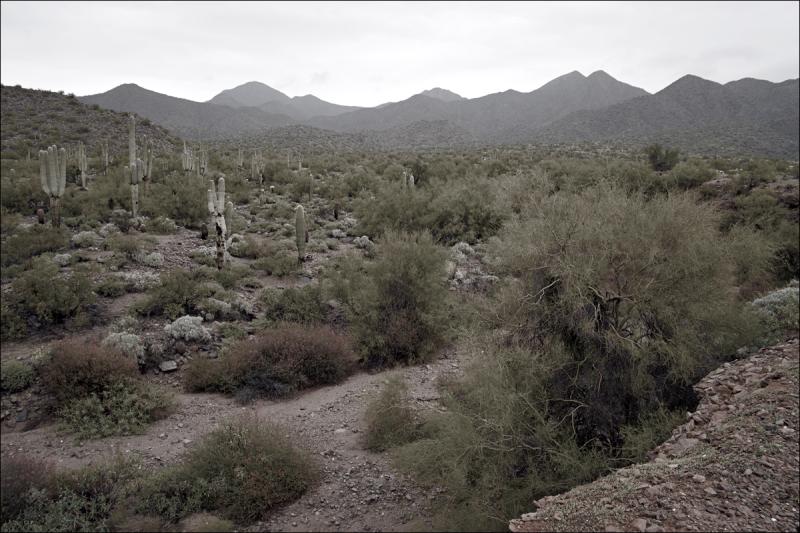 Desert Wash No. 2