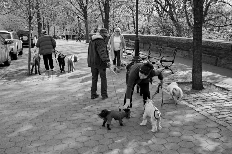 Riverside Park dog walkers