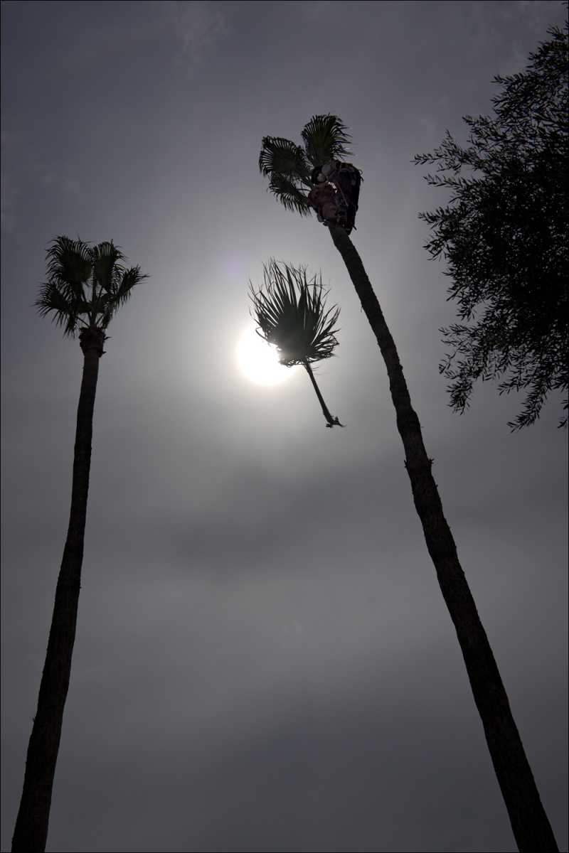 Falling frond...