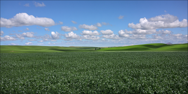 Afternoon clouds in the Palouse...
