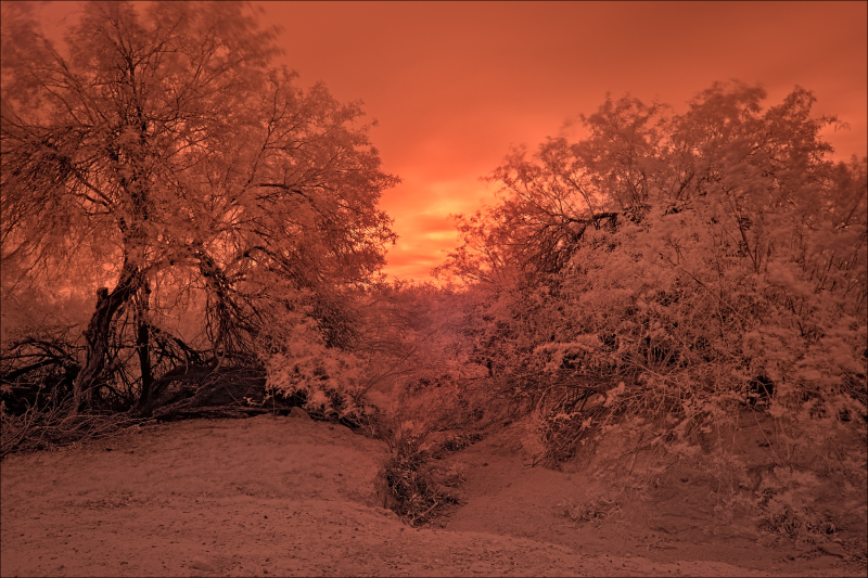 Apocalyptic desert landscape, No. 2
