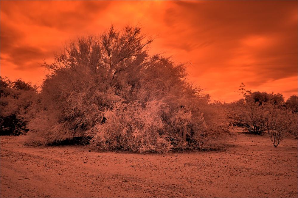 Apocalyptic desert landscape, No. 3