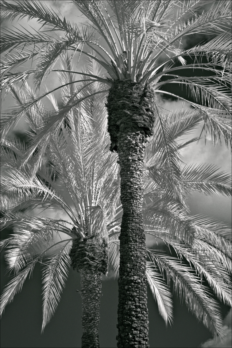 Palm trees, tightly cropped...