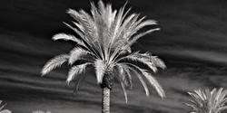 Palm tree panorama...
