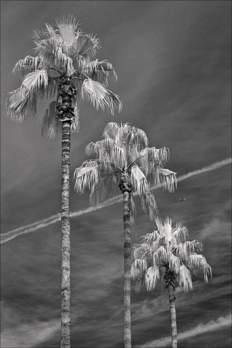 Three palms, some clouds, and a jet...