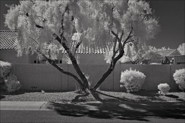 Mesquite tree and gravel, No. 2