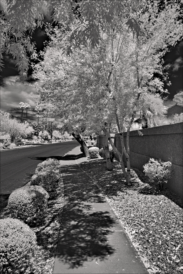 Sidewalk and Palo Verde trees...