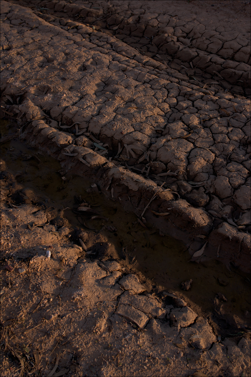 Dried mud at sunrise...